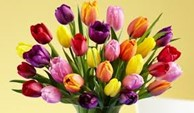 How Do Tulips Disperse Their Seeds? - ProFlowers Blog