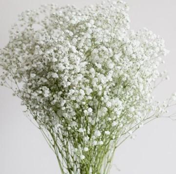 Baby's Breath FlowerDefault Title   Fresh wedding flowers, Babys breath  flowers, Babys breath